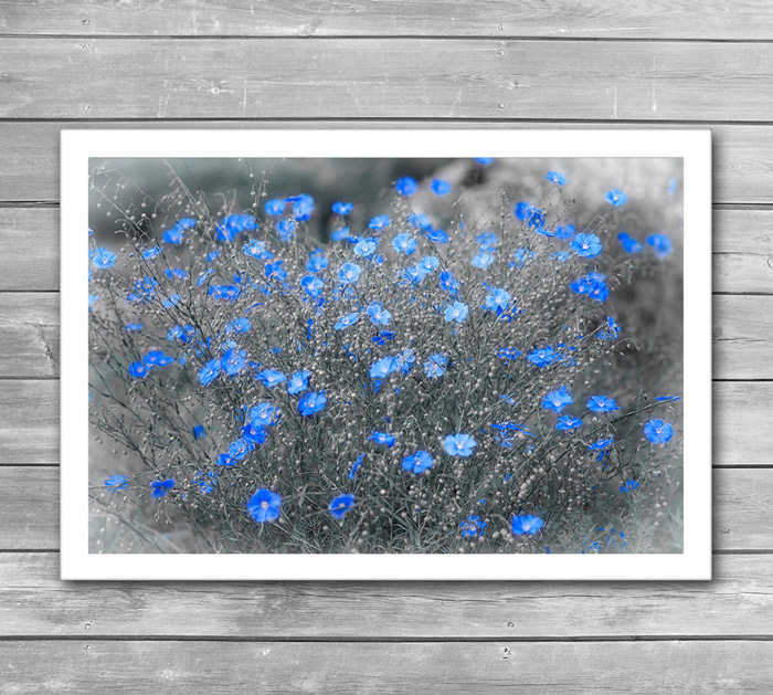Artphoto Blue Flowers