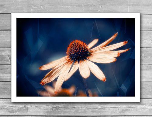 Flowers Indigo Giclee Print