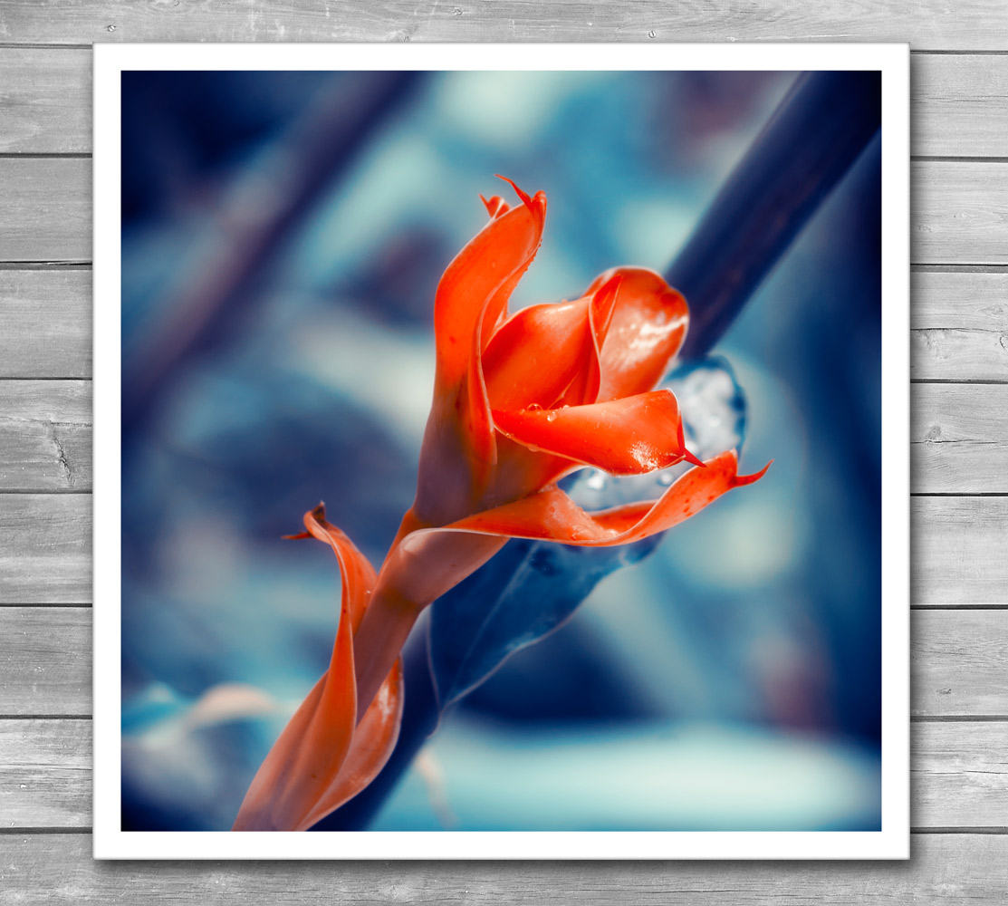 Ginger Flower Photo Print