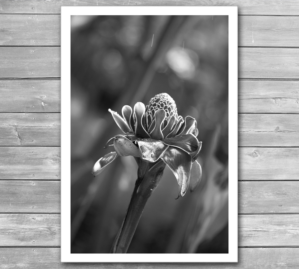 Tropical Flower Photo Print