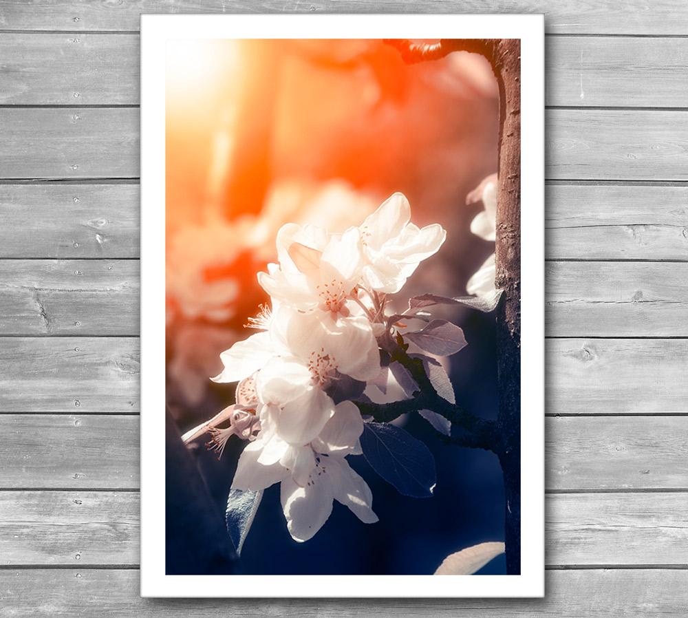 Blossom Photo Poster