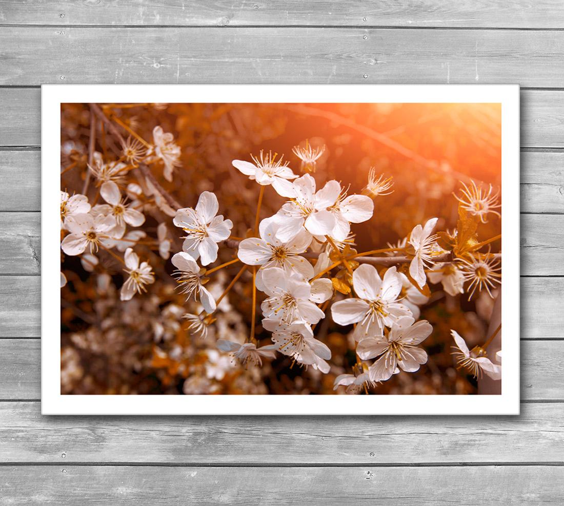 Blossoming Garden Poster