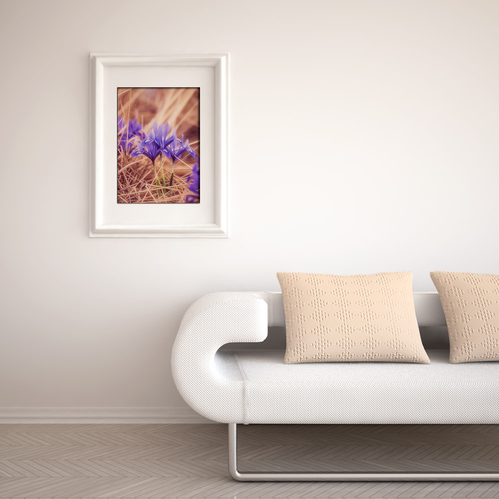Small Iris Photo Print