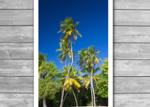 Coconut Palms on Tropical Island