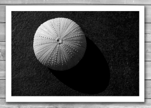 Seashell Photo Print