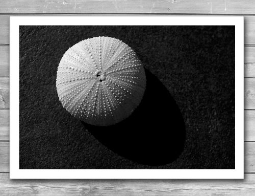 Seashell Black and White Print