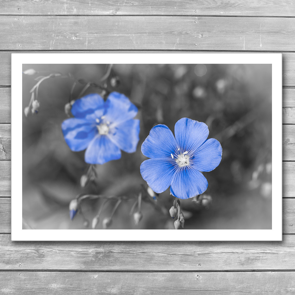 Gentle Blue Flower