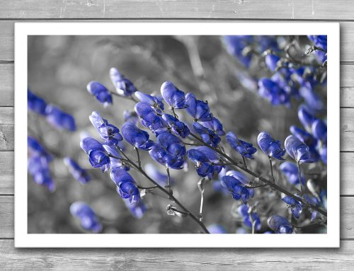 Blue Flower Interior Print