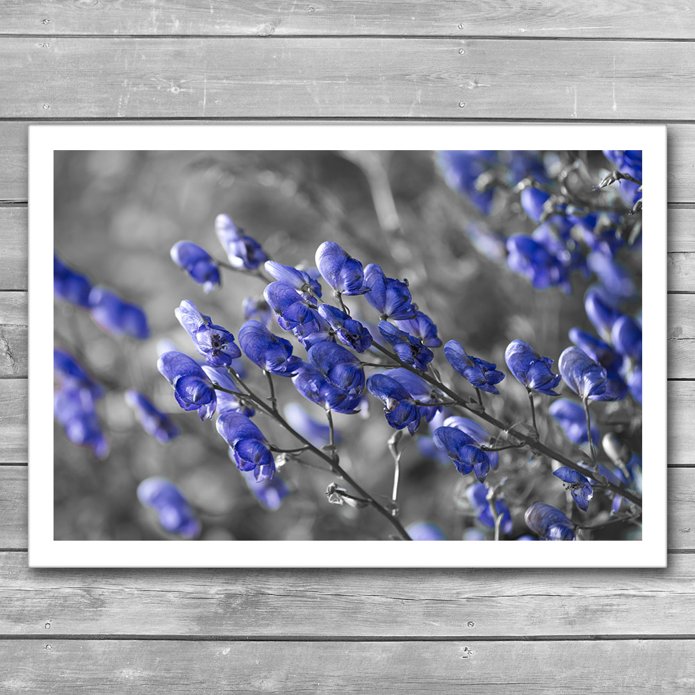 Blue Flowers Interior Print